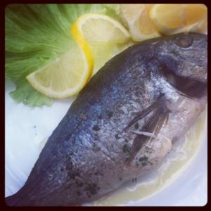 Grillad fisk